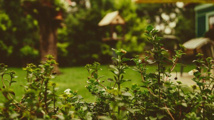 Bosch kompostkværn: Den bedste løsning til haveaffaldet
