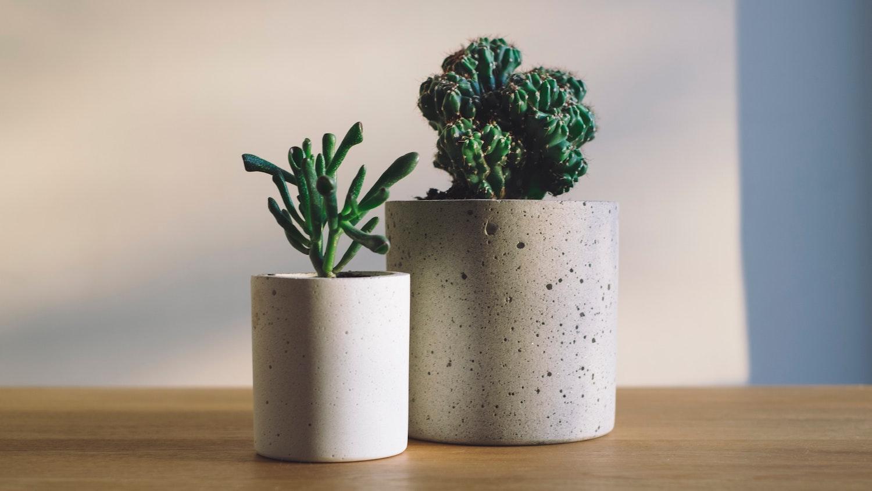 planter i krukke