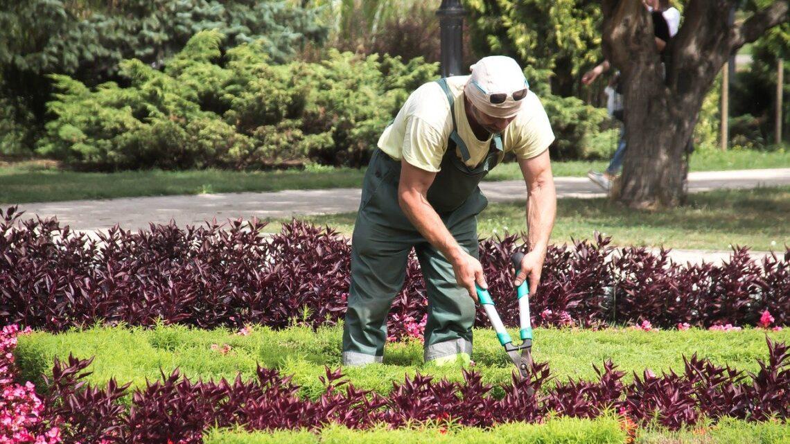 Texas buskrydder – Den kraftige buskrydder til havearbejdet