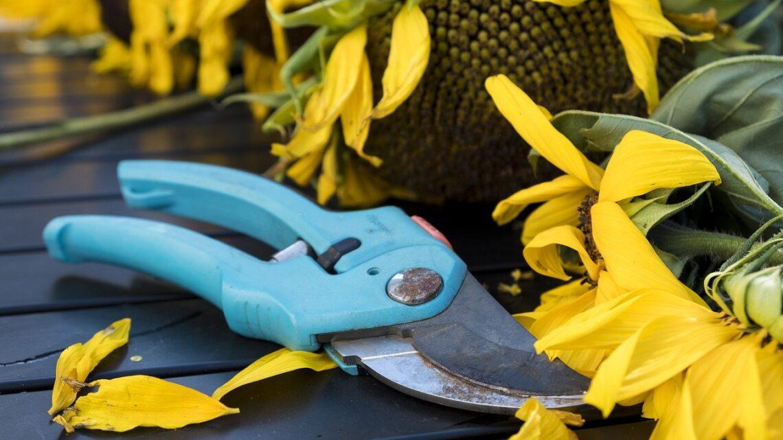 Gardena beskærersaks – Derfor er det et godt køb