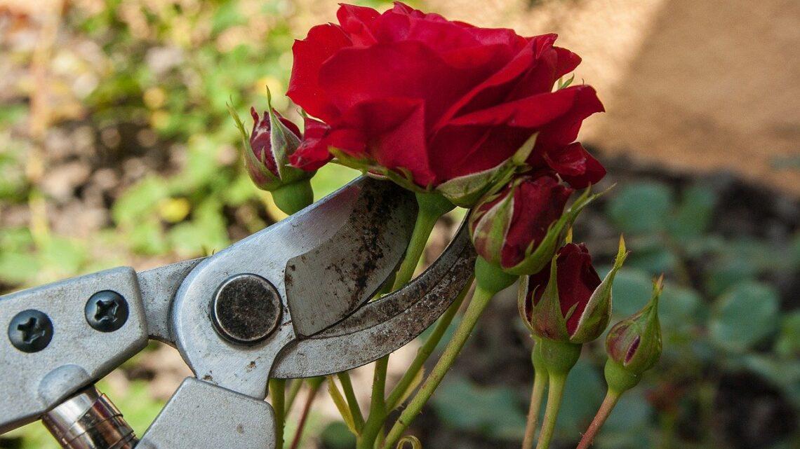 Felco beskærersaks – Gør havearbejdet nemmere med en Felco beskærersaks