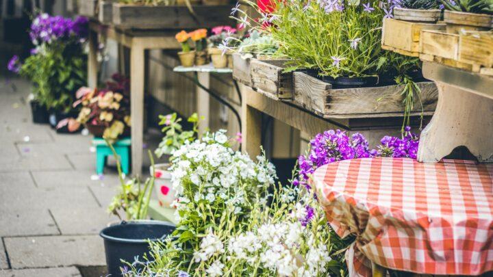 Plantebord Guide – De bedste planteborde du kan finde til forskellige behov