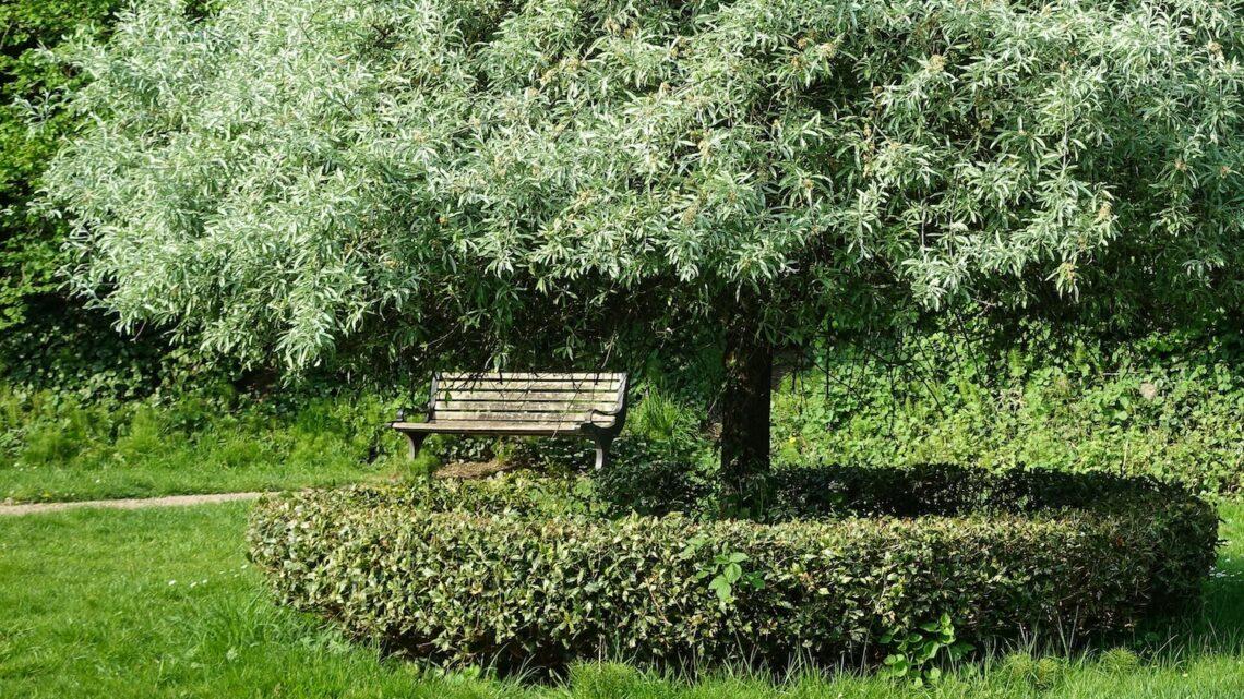 Flotte havebænke – Guide til de bedste havebænke til en helt særlig have